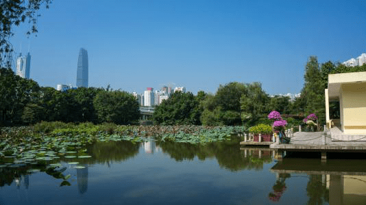 , How Green is Shenzhen? Life in China, SDE Seadragon Education