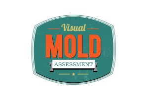 Visual Mold Assessment