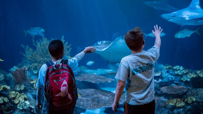 Children observe the shark tank at Shedd Aquarium, Chicago, Illinois. (Shedd Aquarium, Brenna Hernandez)