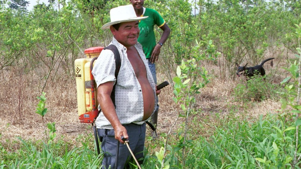 A farmer takes care of his coca crop in this 2001 photo. The Colombian government is looking for viable ways to fight drug production and trafficking. The strategies implemented so far, in conjunction with the U.S. government, have not yielded results. (Carlos Villalon/Getty Images)