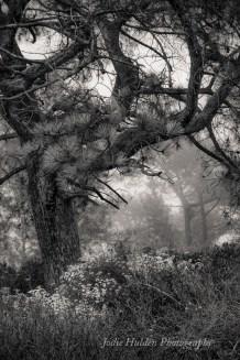 Seeing Silence by Jodie Hulden