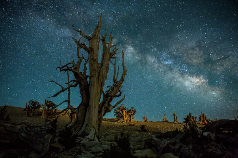 Bristlecones and Milky Way (C) Brian Wright Photography