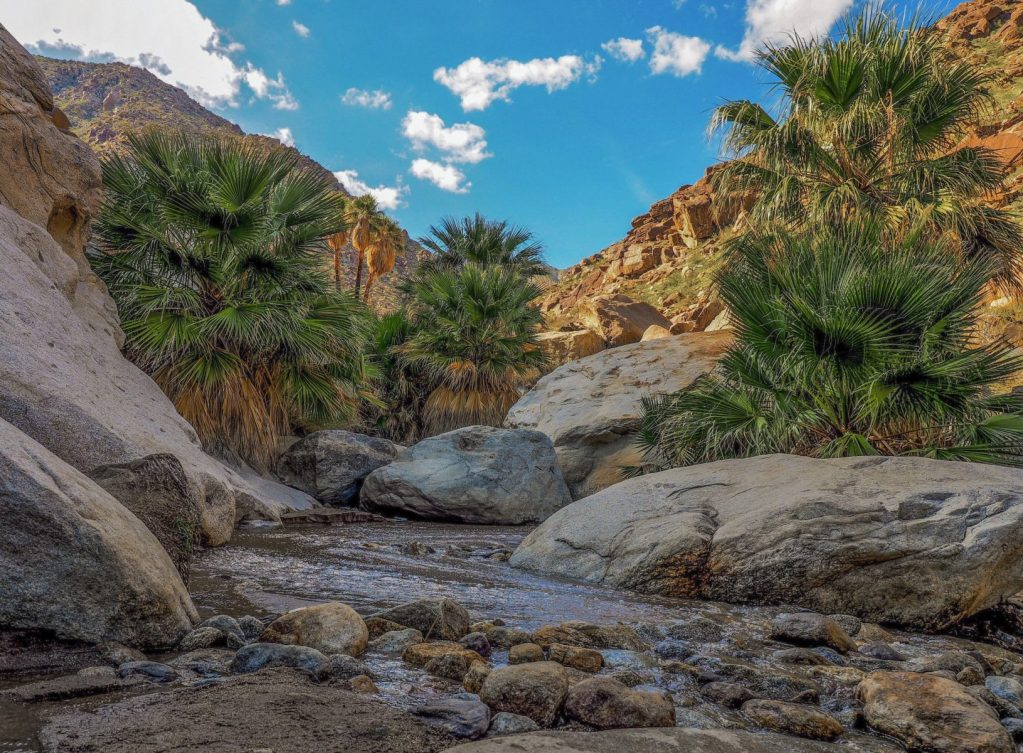 Niall Fritz - The waters of Borrego Palm Canyon