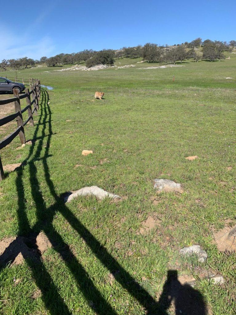 Paul Emus - Fence