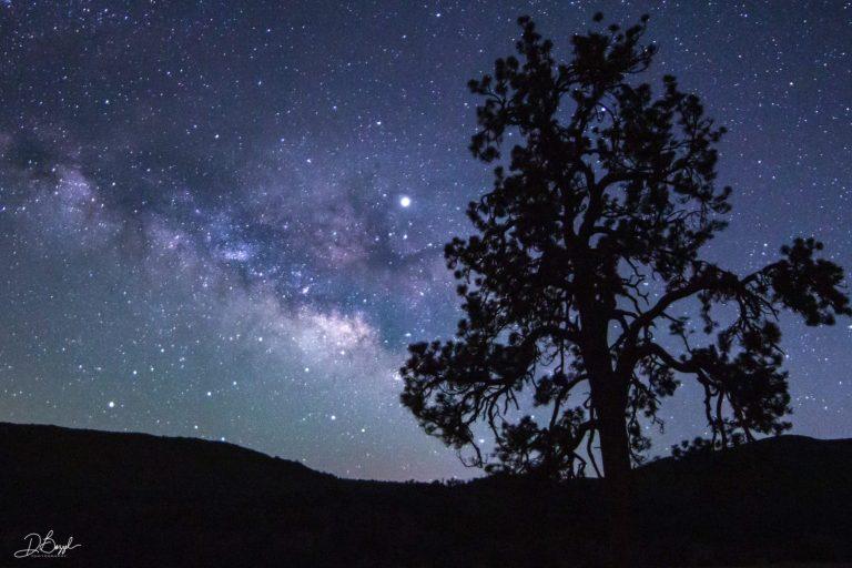 Duane Bazzel - Milky Way & Jeffrey Pine Silhouette