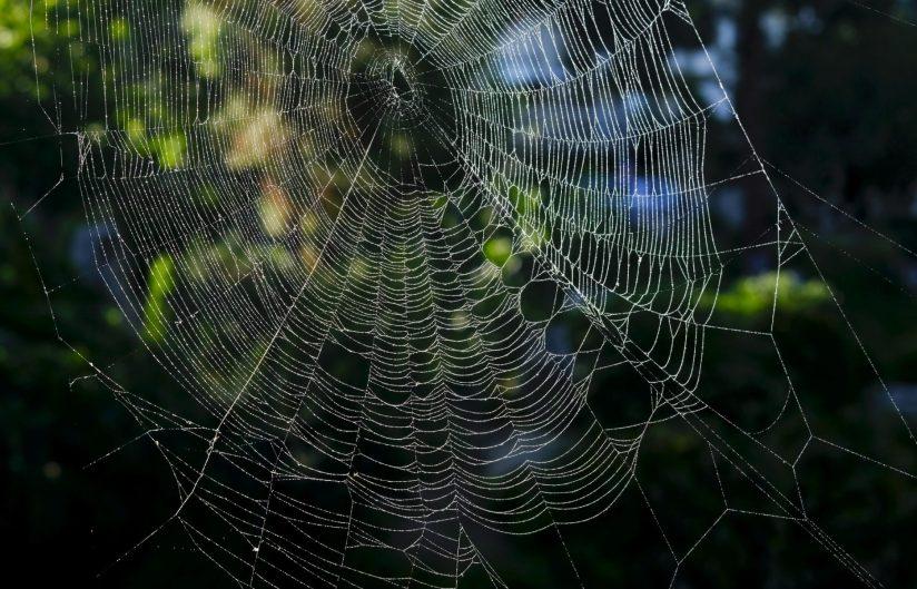 Erica Miller - Spider Lines