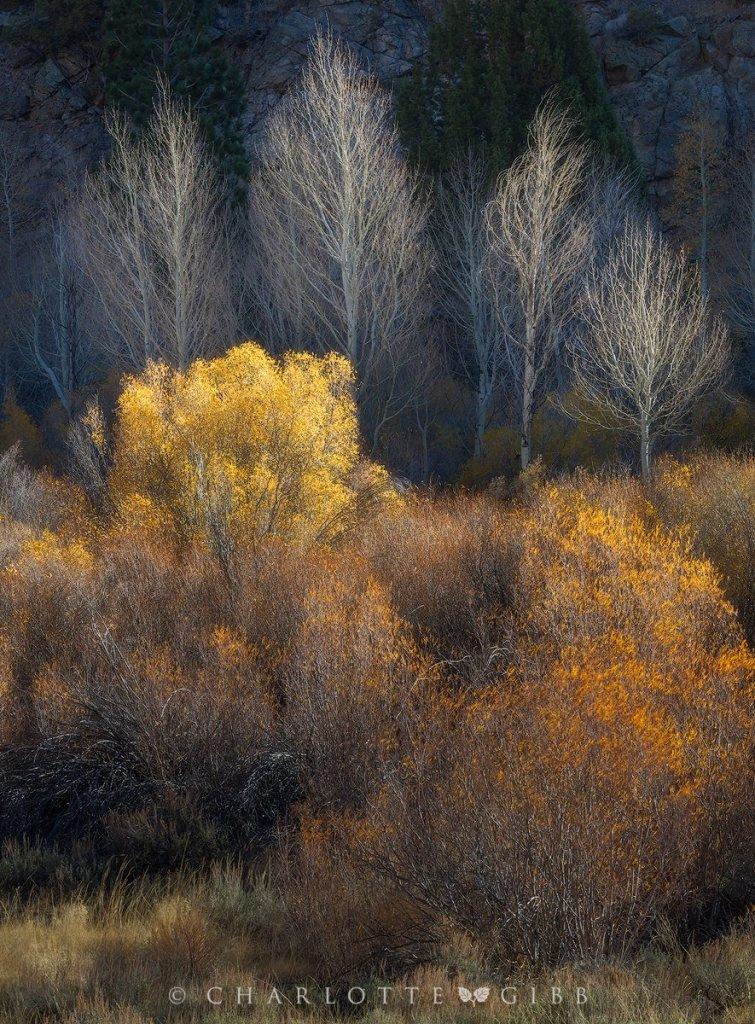 """""""Autumn Aglow"""" (C) Charlotte Gibb"""