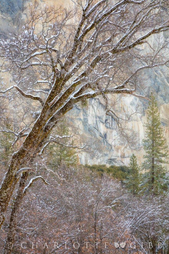 Winter Light, Yosemite; (C) Charlotte Gibb