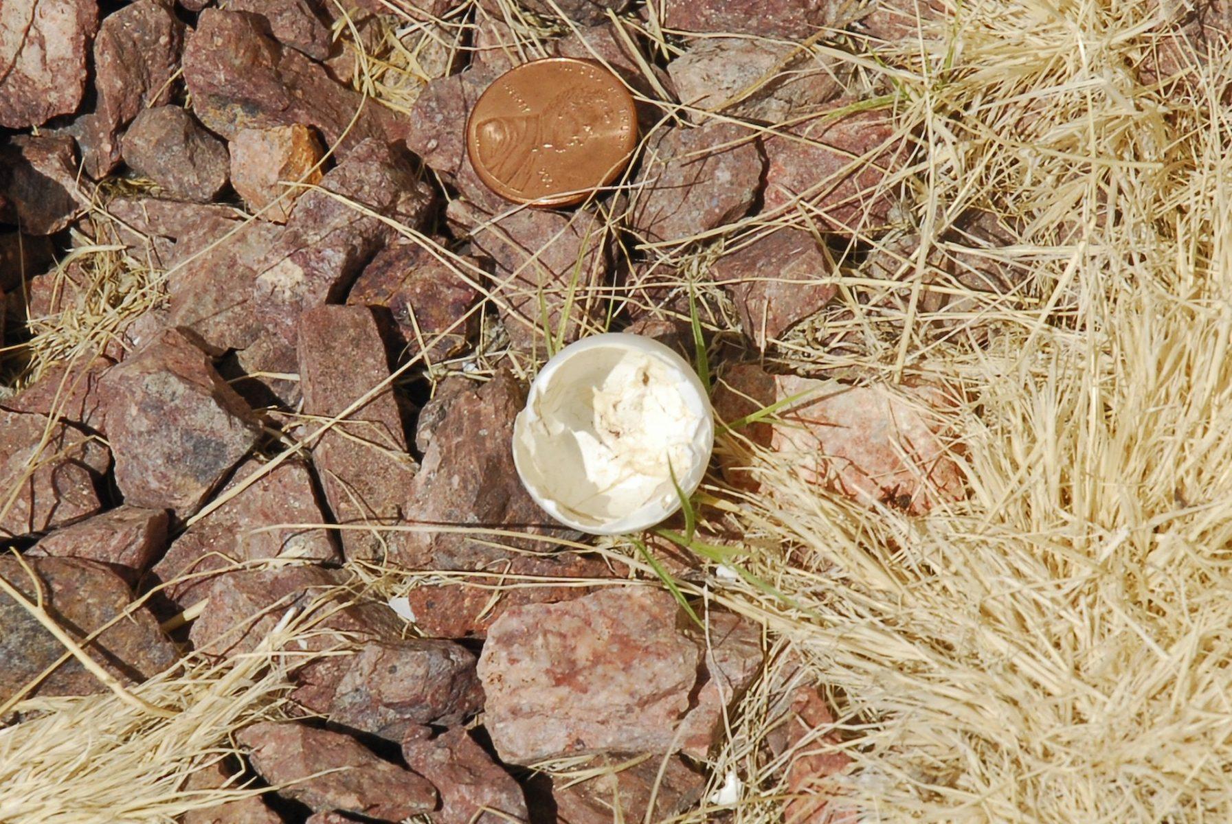 Linda Tully: Empty Nest