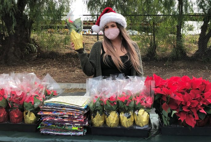 A volunteer prepares to hand out poinsettias at Ramona Senior Center's drive-thru holiday party