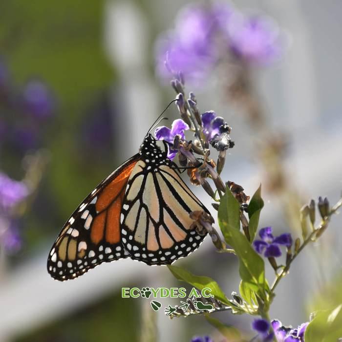 Polinización: un vínculo entre comunidades y biodiversidad
