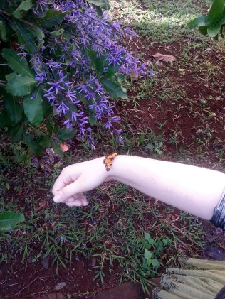 A pretty butterfly visited me on my walk across campus.