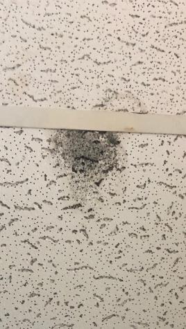Mold manifests in Meadows apartments