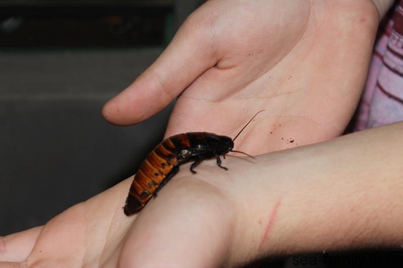 Гигантские тараканы