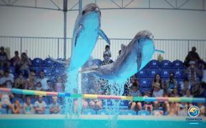 Дельфинарий Оскар в Генгорке