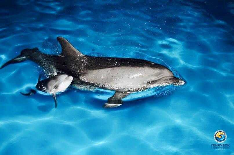 В дельфинарии Оскар