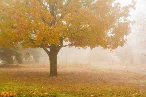 Осенний Геническ
