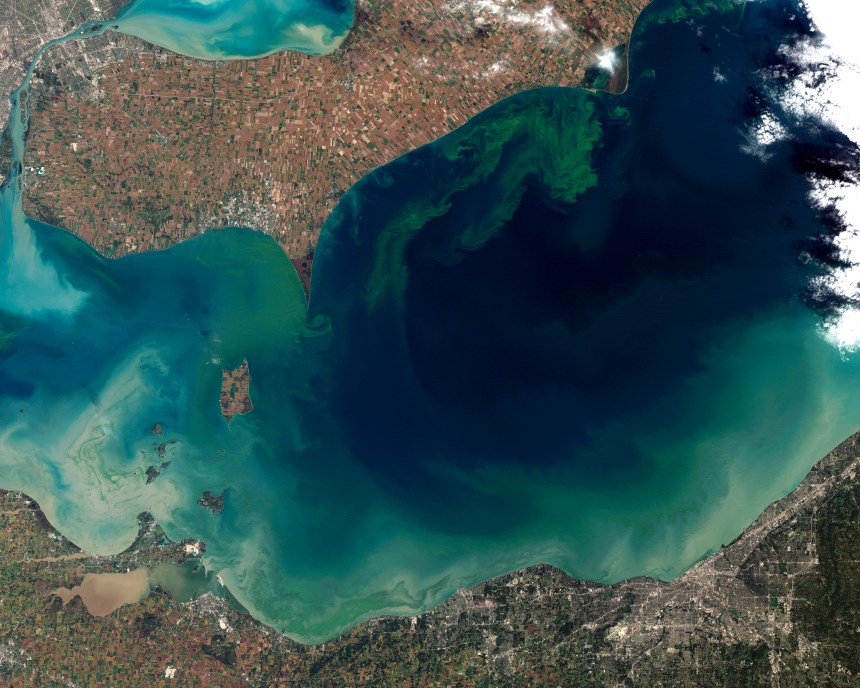 Algae bloom extending from from the northern shore of Lake Eerie, captured by the Landsat-5 satellite on Oct. 5, 2011. (NASA)