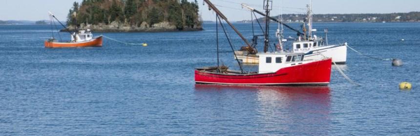 American lobster fishery