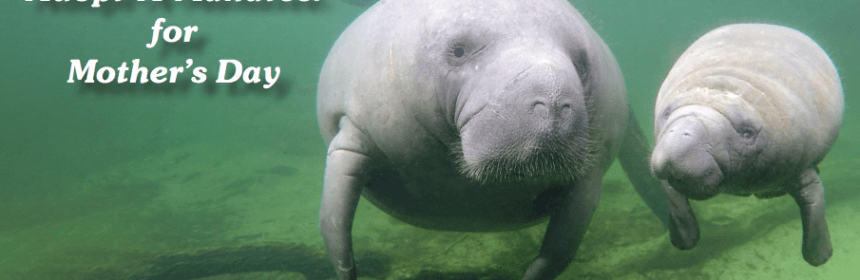 Save the Manatee