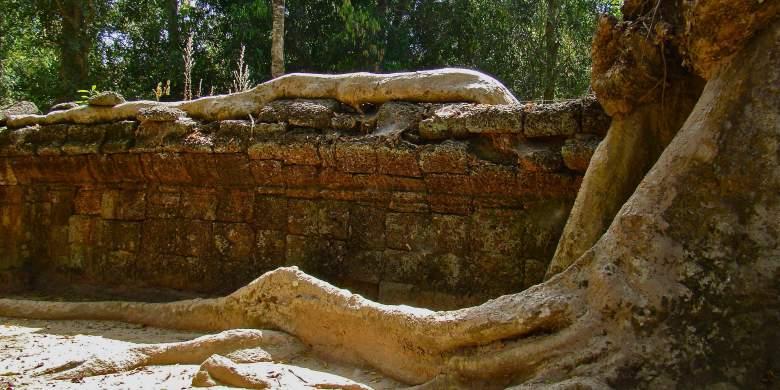Racine temple angkor
