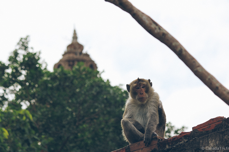 monkeys phnom sampeau