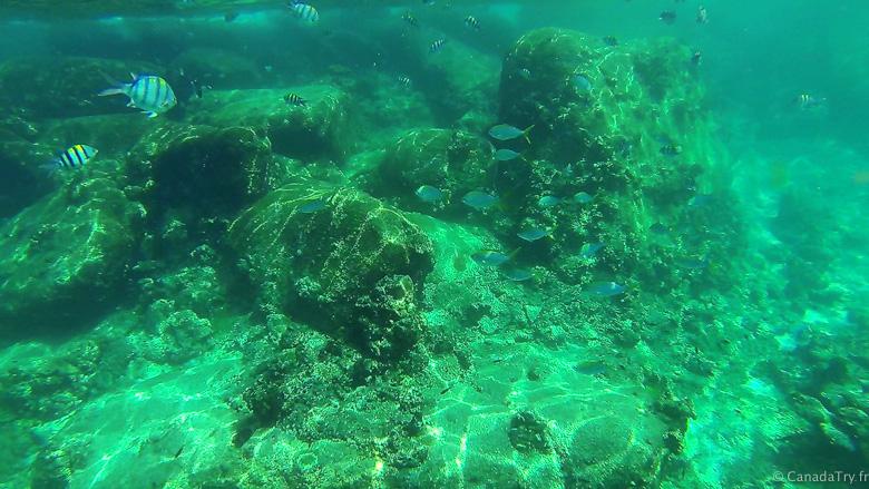 snorkeling thailande