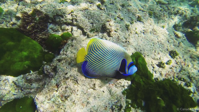 fish snorkeling