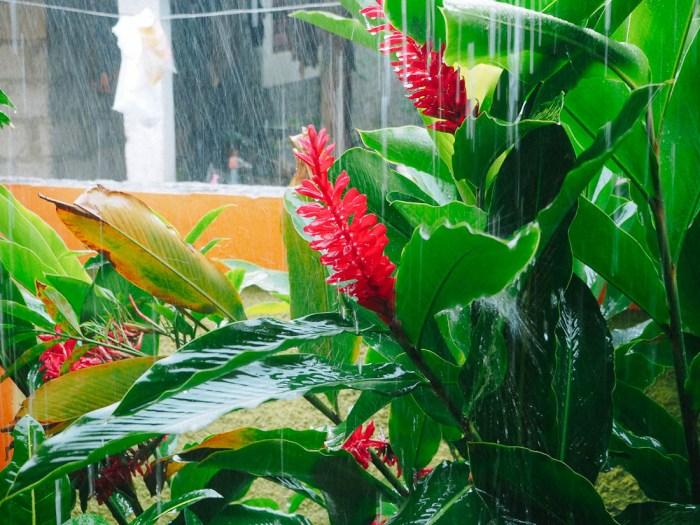 pluie tropicale vinales