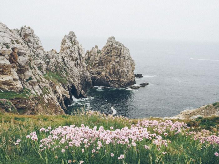 Fleurs et falaise à la pointe de Pen Hir, Finistère