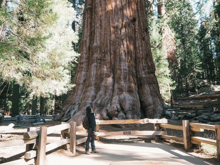 quelle taille arbre le plus haut du monde