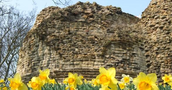 daffodils beseige the keep