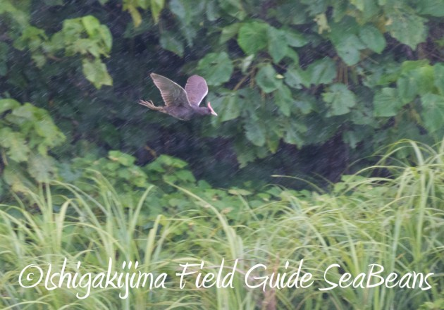 7.18 バードウオッチング 野鳥撮影 ガイド 18