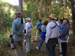 """Looking for the elusive Yellow-billed Cuckoo - SIB members during """"Birding with David Gardner"""" at St. Christopher's on April 21, 2016. Patricia Schaefer"""