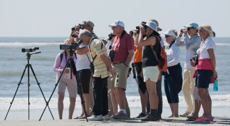 Viewing Terns, Gulls, Red Knots by Charley Moore