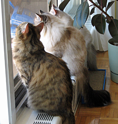Cats at the balcony screen door on a beautiful summer day