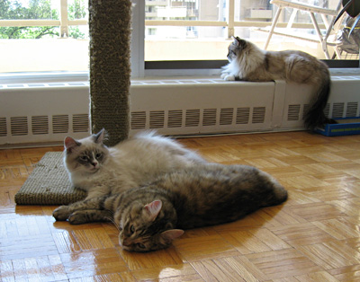 Cats relaxing on a beautiful summer day