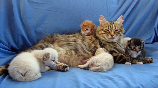Calina and kittens