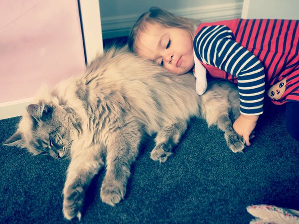Four-year-old Siberian cat Stoli with his 'little sister' Aria