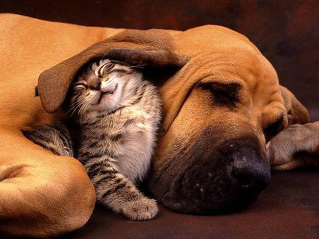 Cat with dog