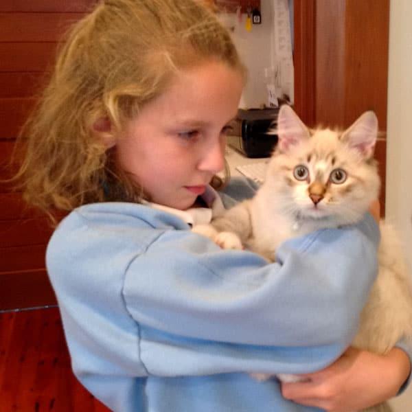 Siberian kitten Foster at 5 months old
