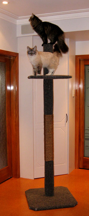 2-metre tall Super Scratcher Deluxe climbing post from Seacliffe Siberians