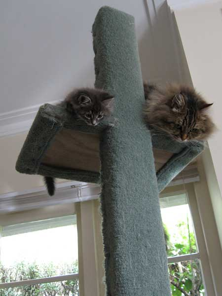 Gracie and Felix looking down on the world