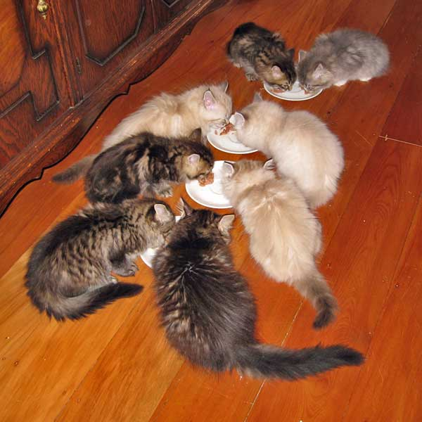 The H and I kittens attack breakfast