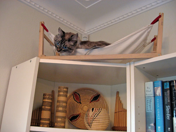 Two-year-old Ksana with a favourite string, in a hammock on top of a book case