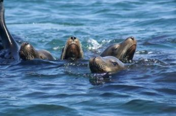 Outreach International: Four seals together in the water next to a black boat.