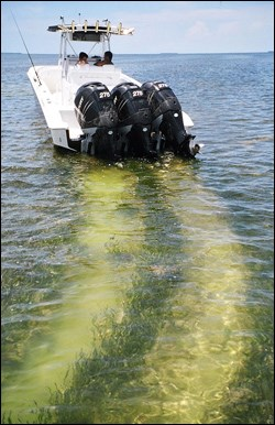 Propeller damage to important seagrass meadows