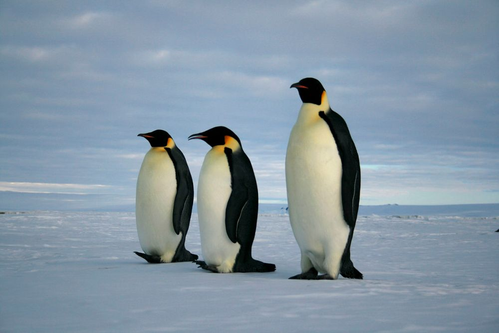 Watch March of the Penguins 2