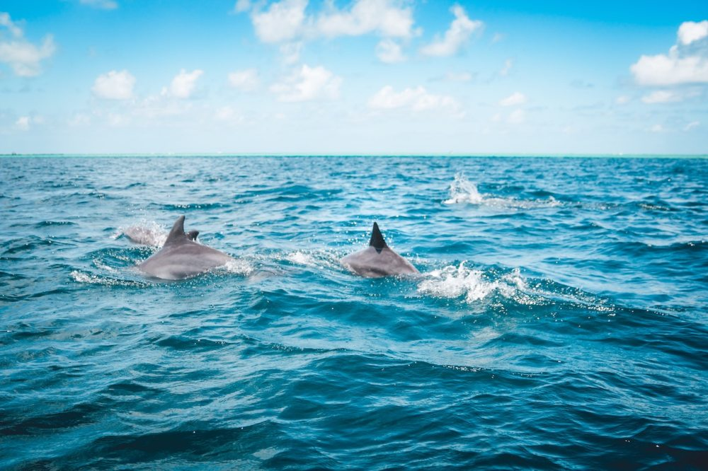 Dolphins on the surface of the ocean