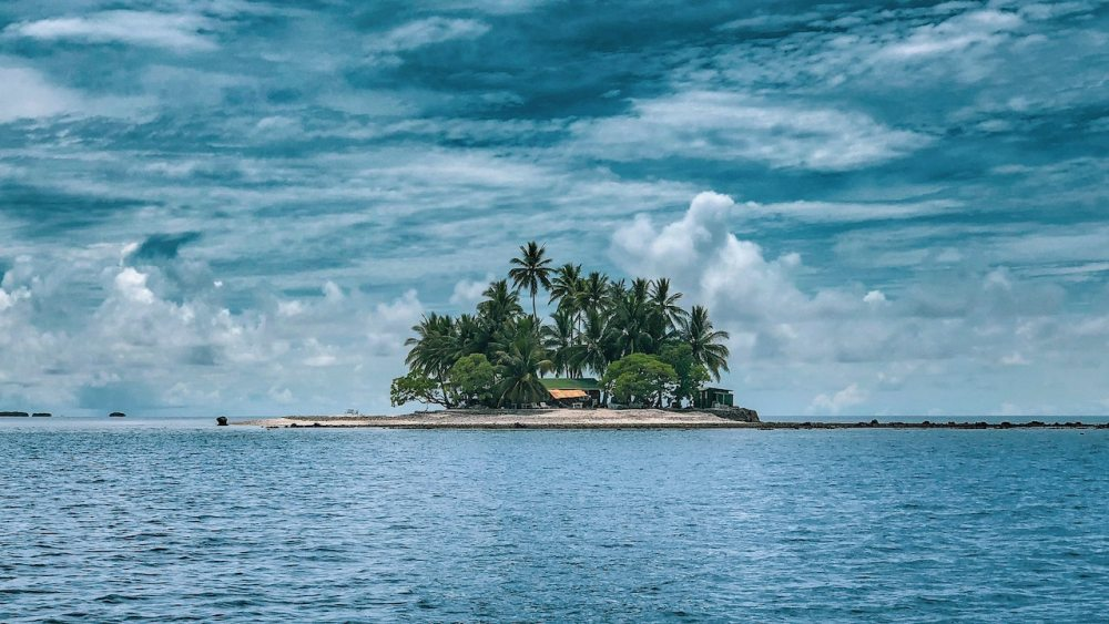 A remote tropical island is where many marine conservation projects take place.